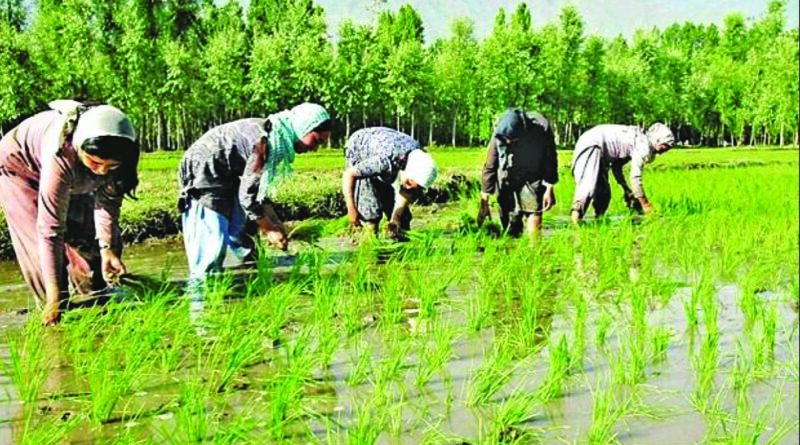 FARMER PRODUCER ORGANISATIONS (FPOs) – AN AVENUE FOR FINANCING TO FARMERS